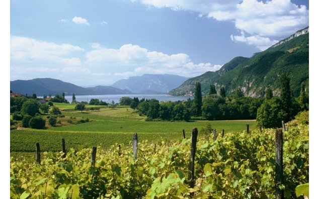 Vignoble de Brison-Saint-Innocent et lac du Bourget